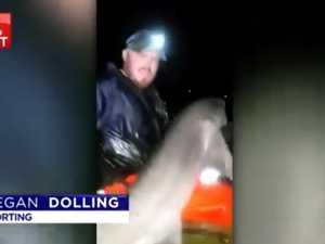 Man knocked off kayak by huge shark
