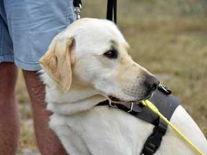 Meet Gladstone's newest and cutest guide dog