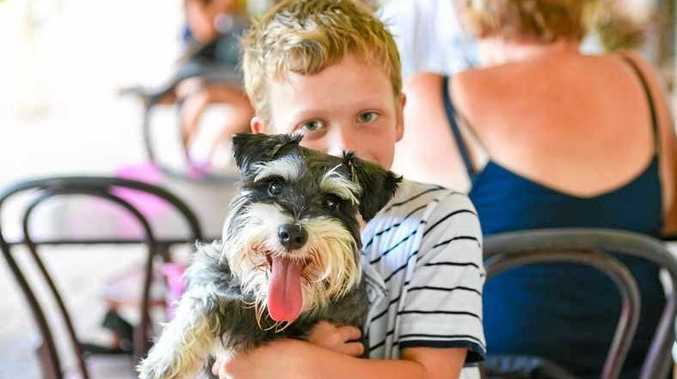 PUPPY LOVE: This little boy cuddles his schnauzer at the biannual schnauzer picnic at the Boreen Pt Aplollonian Hotel on the weekend.