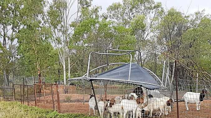 Trampolines and goats: All go flying in wild CQ storm