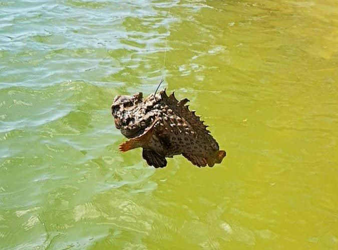 Jai and Heath Aughton hooked this stonefish while fishing under the Noosa Sound Bridge.