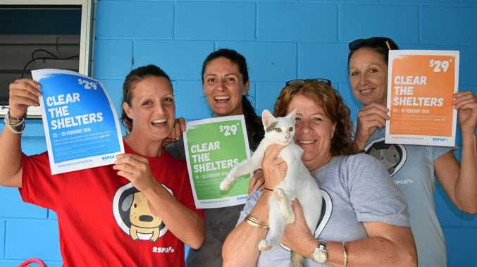 PRICE IS RIGHT: Shanna Waugh, Courtney Ey, Nicole Cleary and Kitty O'Brien, with Mario, welcome the $29 adoption sale starting on Friday.