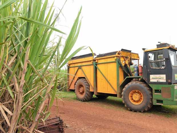 Bundaberg Sugar is growing its first organic sugar crops.