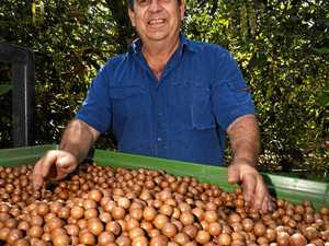 Region's growers too hard to crack