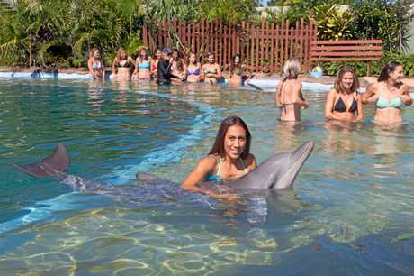 Dolphin Marine Magic is one of Coffs Harbour's most revered longstanding tourist attractions.