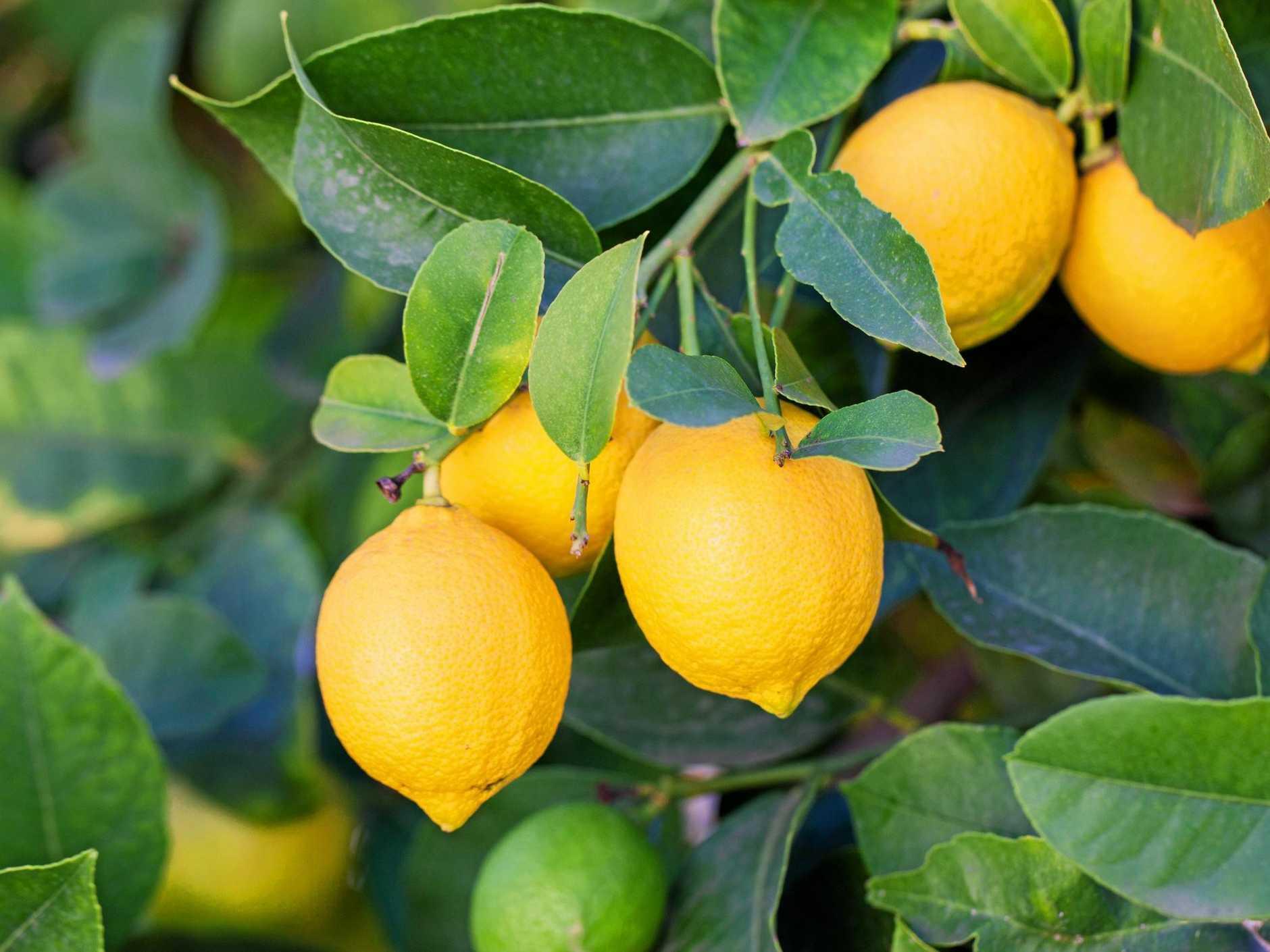 Lemons.