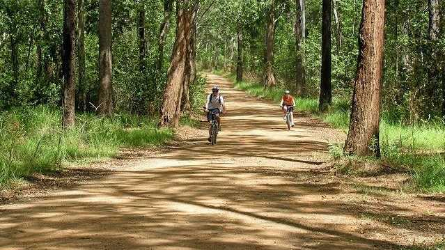 ON THE ROAD: Boys riding bikes on the forestry roads.