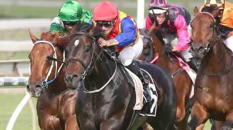 Pierata was bought for $160,000 and has earned almost $2m in prizemoney.