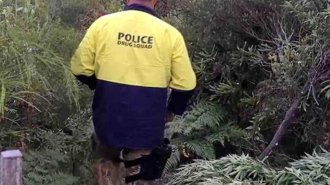 Police drug squad working on their Cannabis Eradication Program