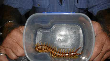 The centipede Robert Porter caught.