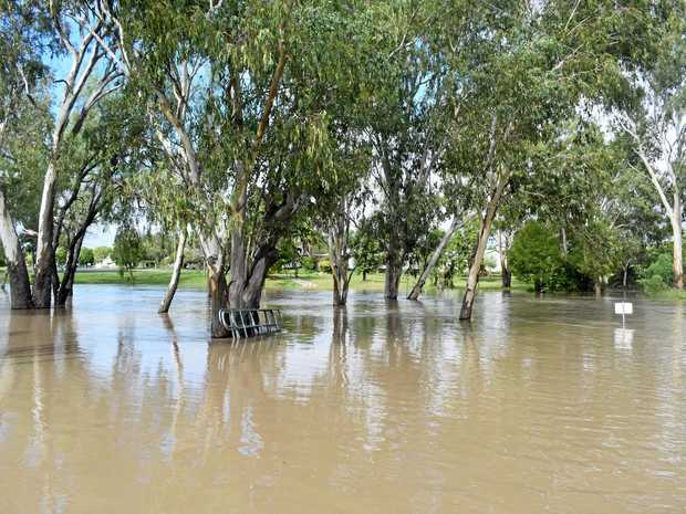 RISING UP: Bungil Creek threatened to swallow the F.H. Orr Bridge in Roma.