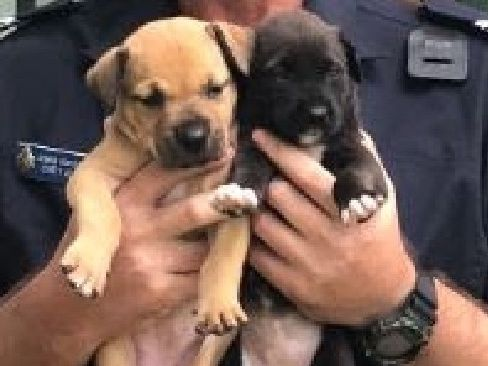 Coen police officer Senior Constable Carey Allen with the two rescued puppies from Archer River.