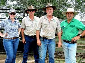 It's shaping up to another classic Gympie carcass showdown