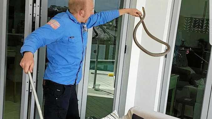 Snake Catcher 24/7 Sunshine Coast's Stuart McKenzie warns residents to always call a professional.