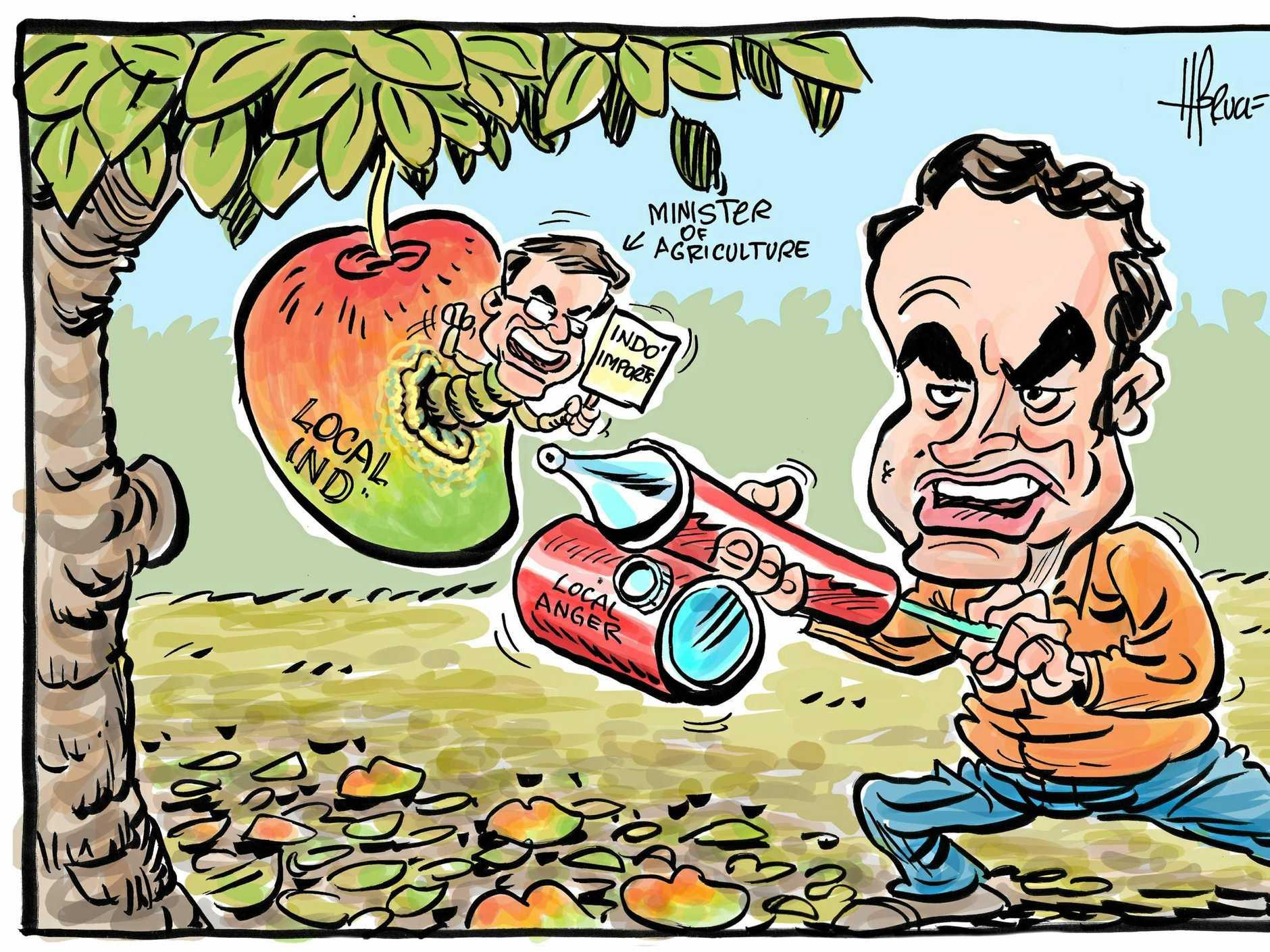 Harry cartoon mango