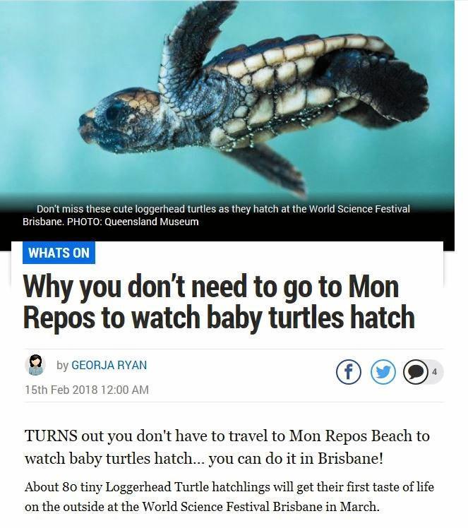SHELLSHOCK: The story from the Sunshine Coast Daily.