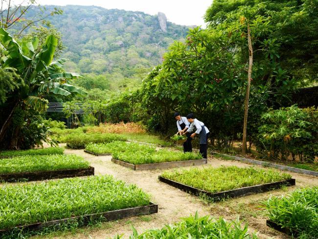 Organic Garden, Six Senses Ninh Van Bay. Picture: Kiattipong Panchee.