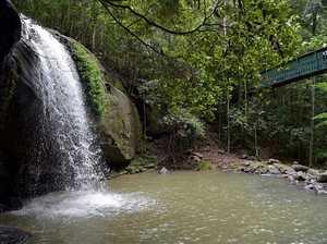 Serenity Falls-Buderim Forest Park