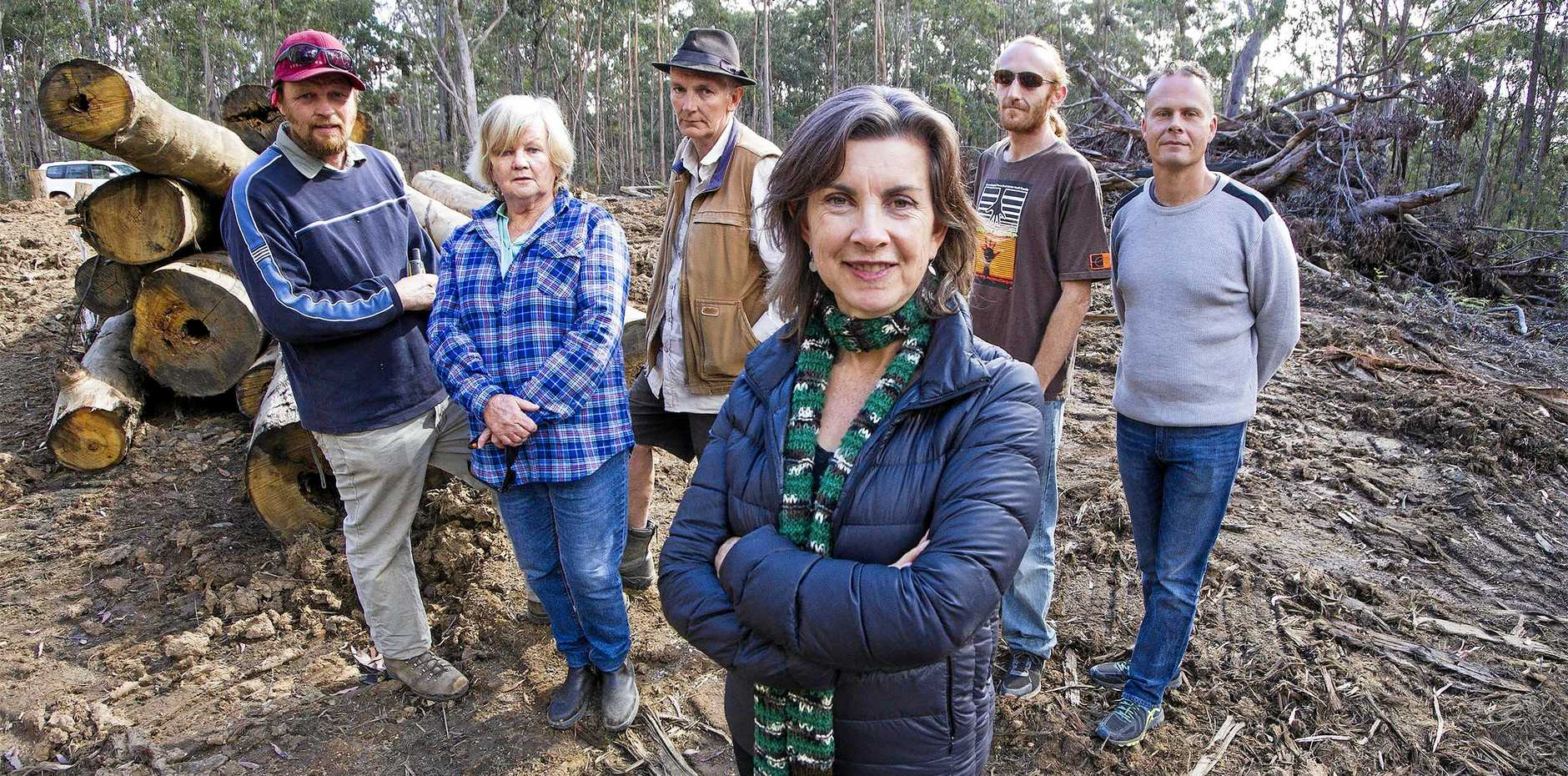 CONSERVATION DREAM: Greens MLC Dawn Walker will join forest activists to advance the Great Koala National Park.