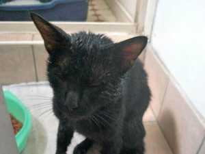 Slippery black cat alerts man to shed break-in