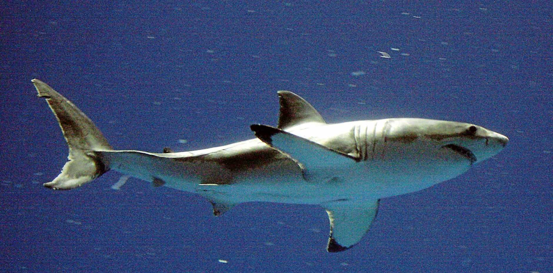 SCIENTISTS have created a new approach to counting sharks that may lead to a greater understanding of the numbers of a range of species.