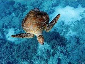 Calls for harbour 'go slow' to protect turtles