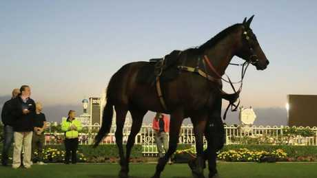 Winx after completing a trackwork session.
