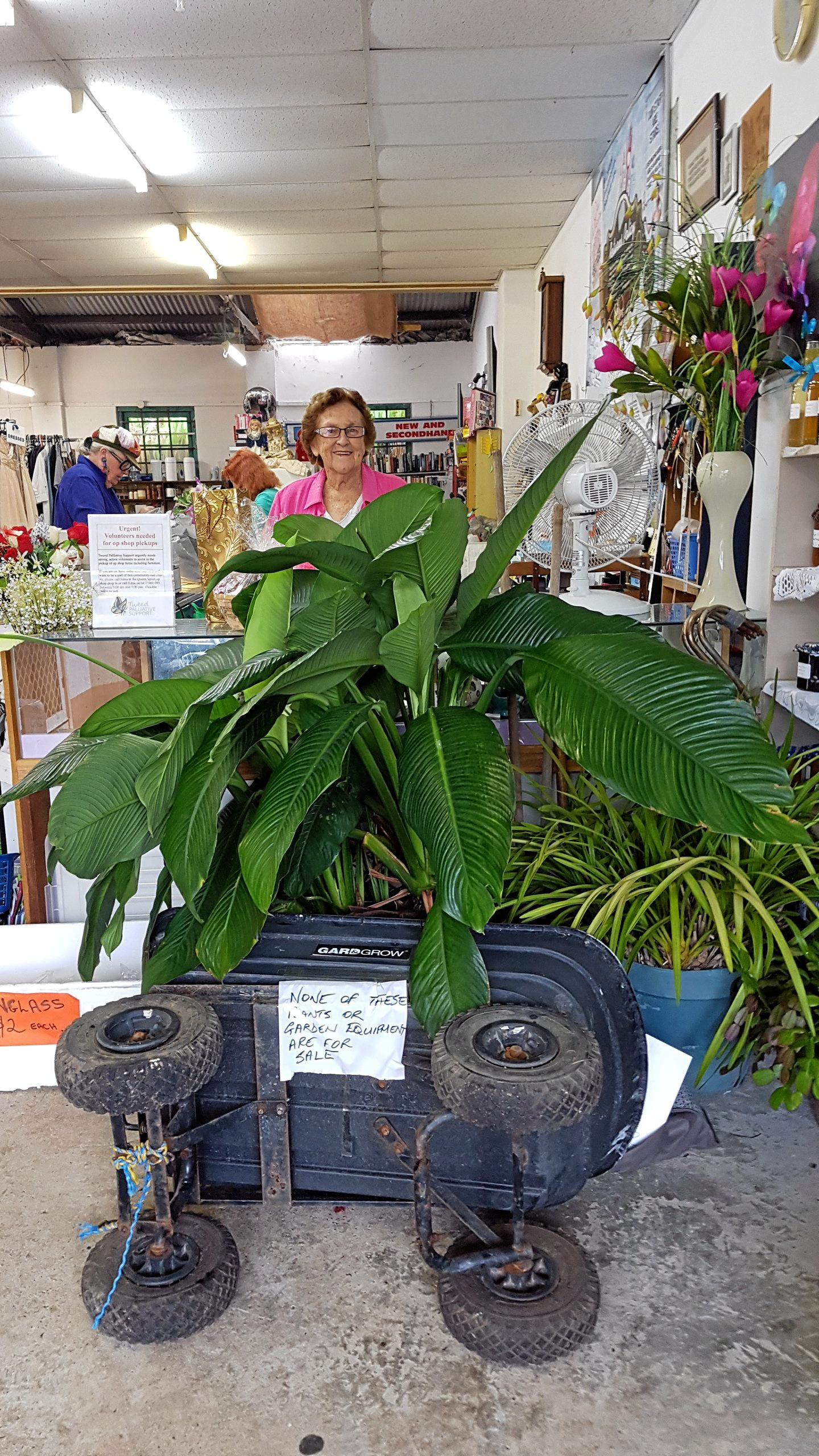 TALL TALE: Edna Gorton with the plants picked up from the wrong house.