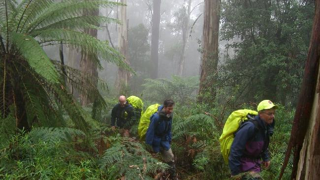 Bushwalkers search for missing man Warren Meyer along a hiking trail in Mt Dom Dom, Victoria.