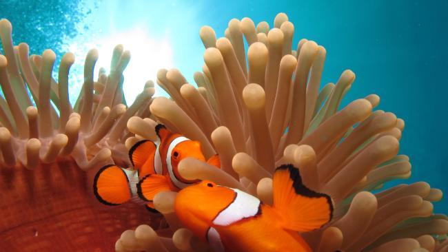 Queensland's Great Barrier Reef.