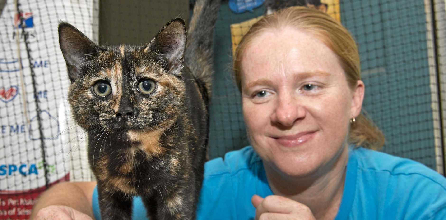 PET PORTAL: Cassie Ellis, Toowoomba Animal Care Centre manager with surrended kitten. Friday, 16th Feb, 2018.