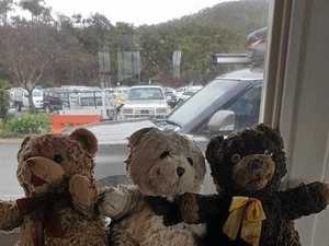 Mystery teddy bears found floating in North Queensland