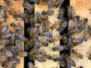 Buzz in the step of CQ bee keepers