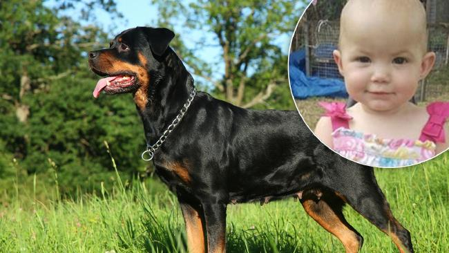 Kamillah Jones was killed by a rottweiler who jumped a fence and attacked her.
