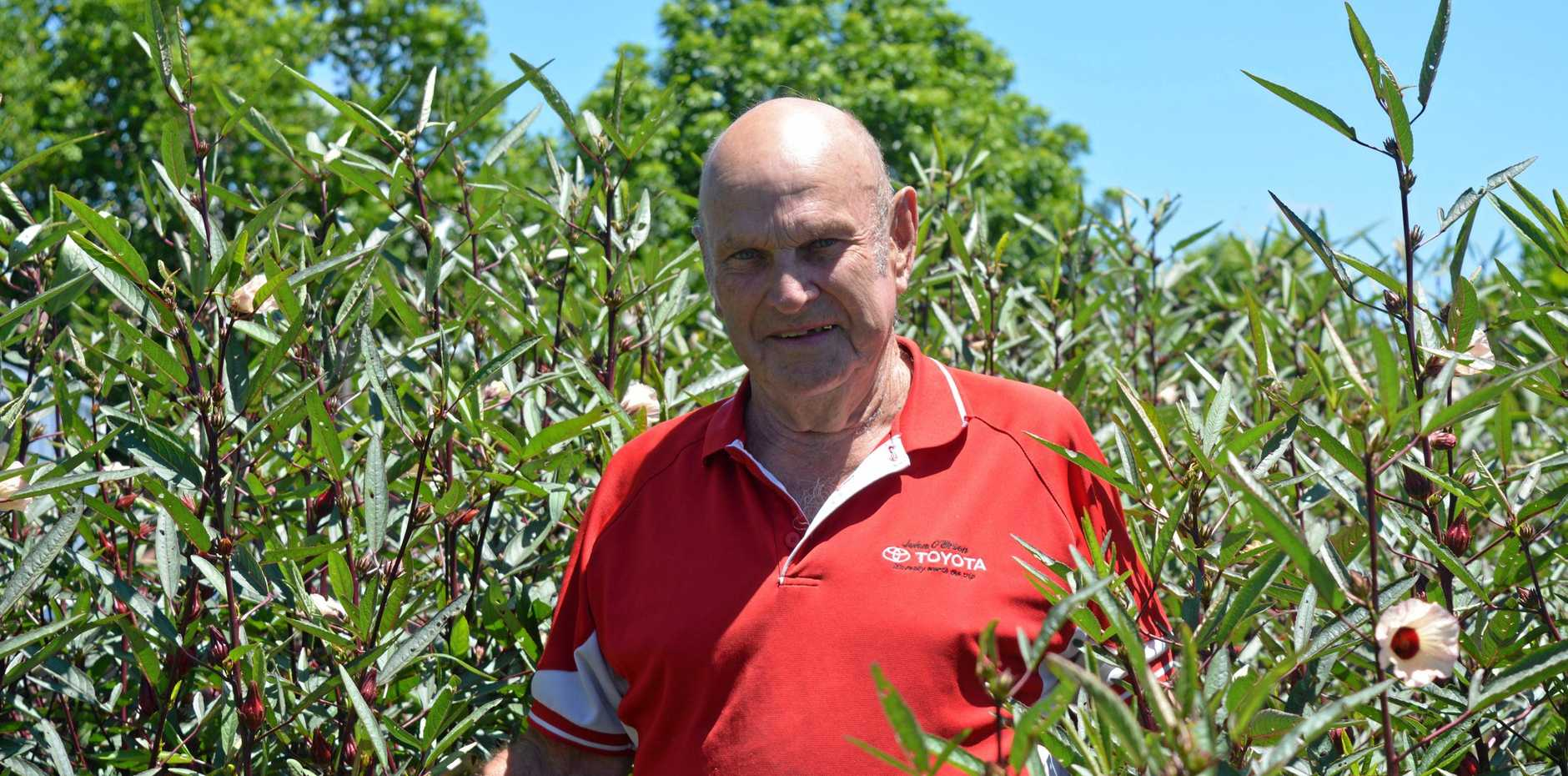 PROUD AS PUNCH: Grantham hobby farmer Ken Arndt with his latest roselle crop.