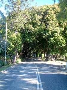 Mango Avenue at Eimeo