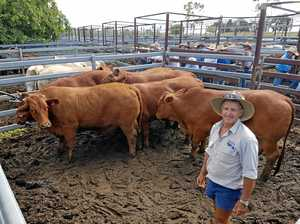 CQ wet holds cattle numbers back from sale