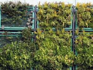 Calls for hanging gardens on Coast towers