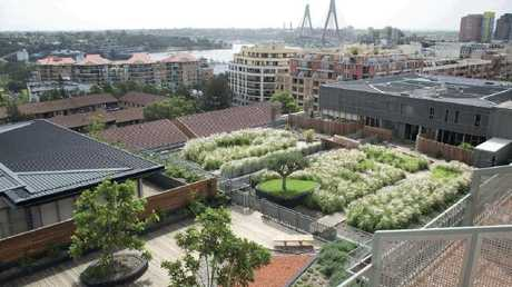 A rooftop garden in Pyrmont, in Sydney. Source: Green Roofs Australasia