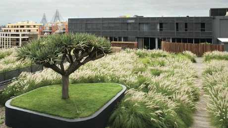 A rooftop garden in Sydney. Source: Green Roofs Australasia