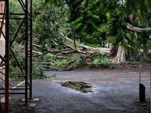 Fallen tree in Ipswich CBD