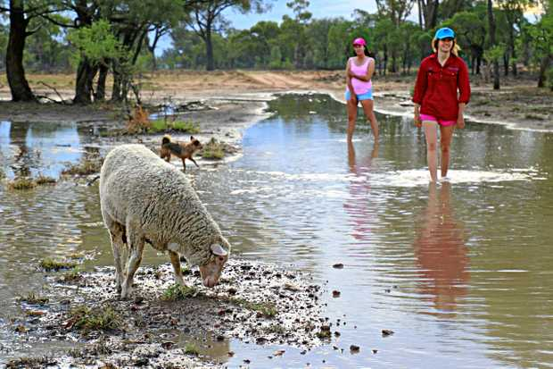 GREAT SIGHT: Zara and Isobella Agar strolling through the water with their dog Bonnie and merino lamb Olive Oyle on Barbara Plans in south-west Queensland this week.