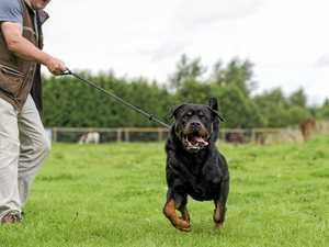 Council crackdown on dangerous, menacing dogs
