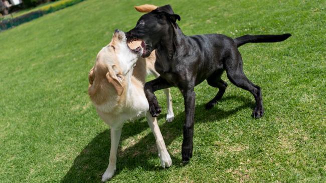 Steve Austin believes off-leash parks are dangerous. Picture iStock
