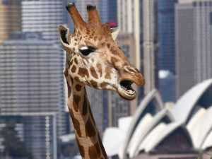 World class zoo to open in Sydney