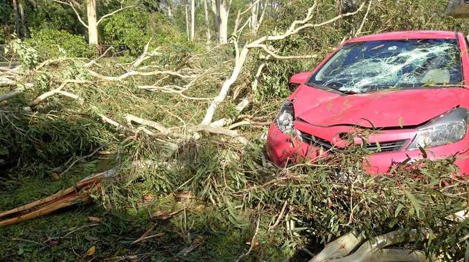 A vehicle on Peter Clutterbuck's Landsborough property was totalled by a falling tree crown.