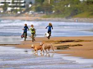 'No excuse': Coast man fights council's $243 off-leash fine
