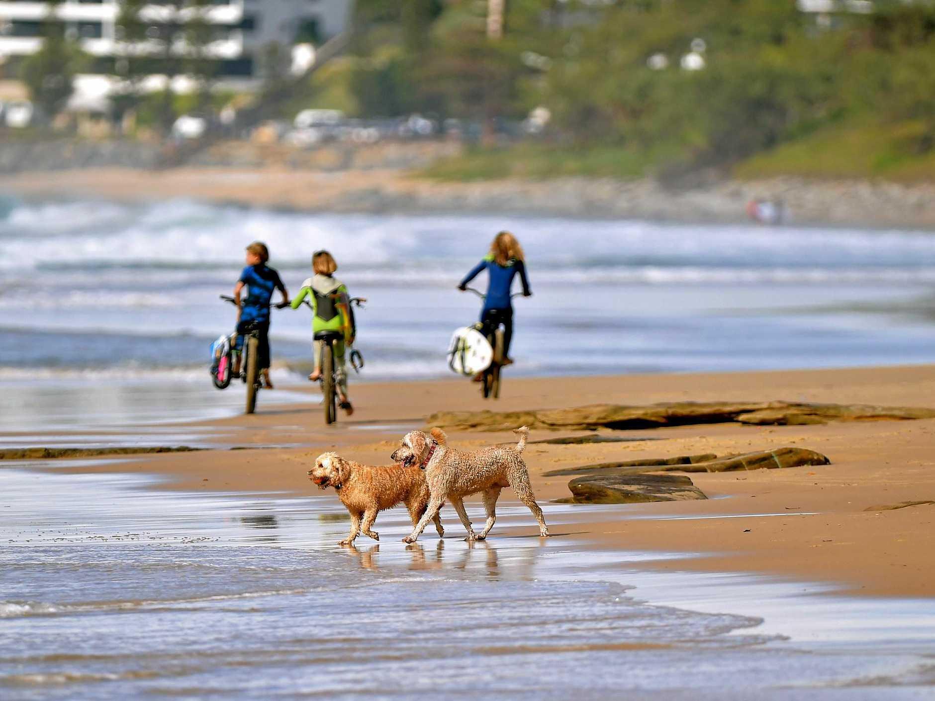 Dogs play on the beach.