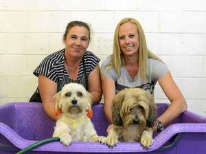 Get your puppies squeaky clean to help fight cancer