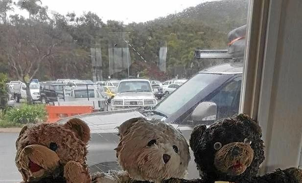 Harbour Master Brad Teys found three stuffed bears in Shute Harbour across three days.